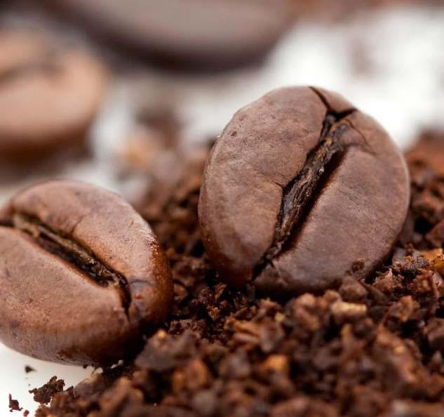 ramassage de cerises de café