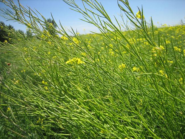 Une culture très consommatrice d'eau, de pesticides et d'herbicides