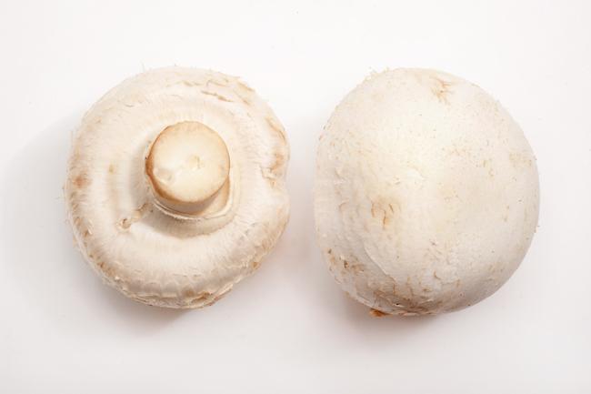 champignon de culture