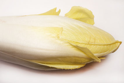 l'endive ou chicon (Nord de la France)