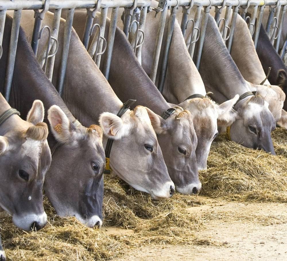 aliments bétail - soja