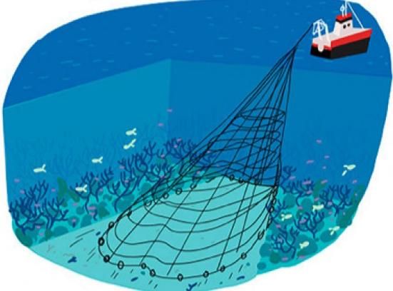 Ilustration Pénélope Bagieu