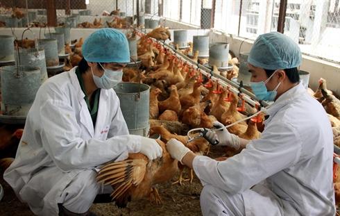 virus grippe avaire