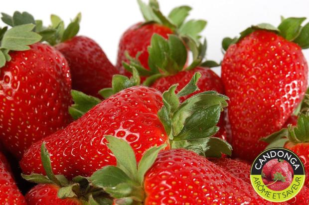 fraise espagnole