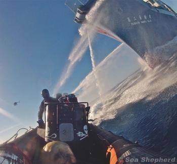 Secrétaire Sea Shepherd France