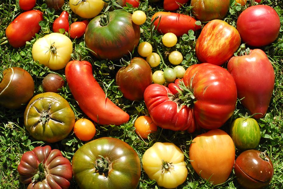 tomates varietes