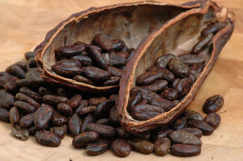 cacao chocolat