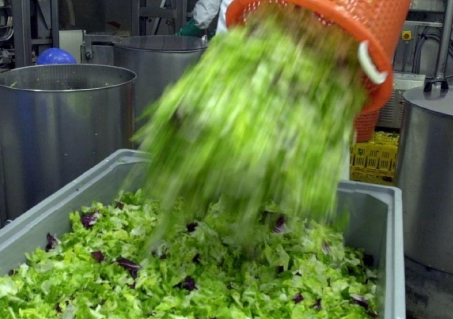 salade en sachet bactéries