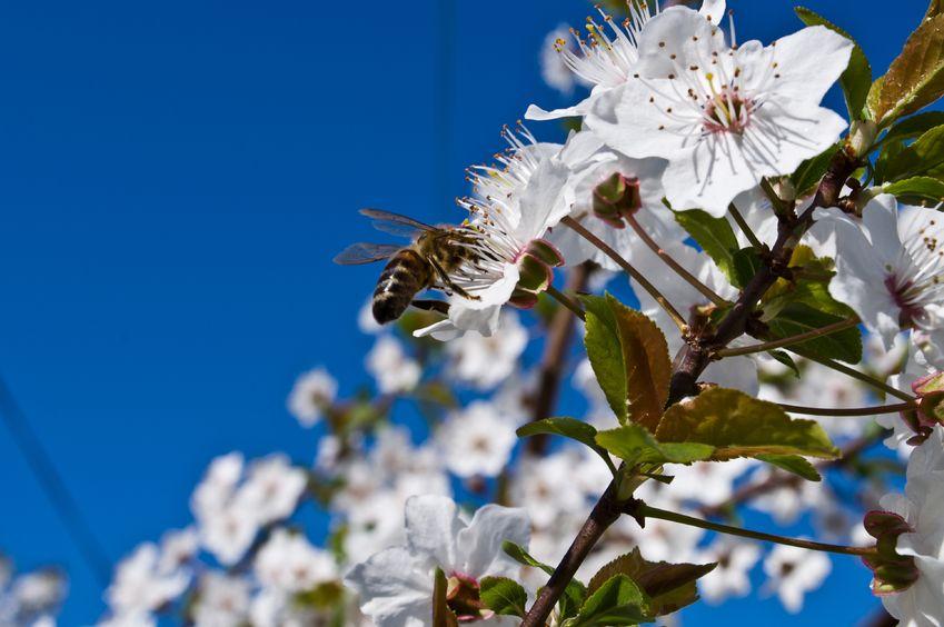 abeilles et pollinisateurs