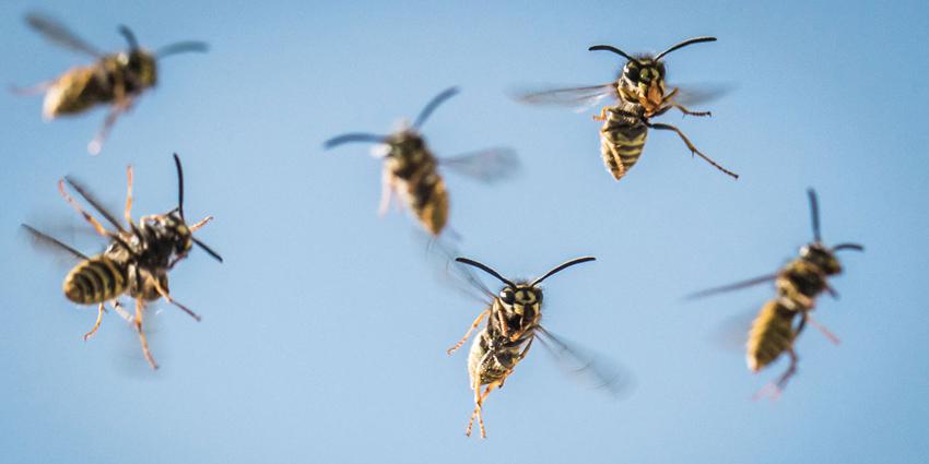 pesticides et pollinisateurs