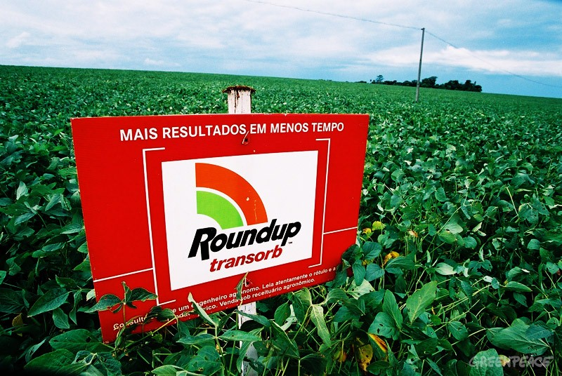 soja Roundup OGM