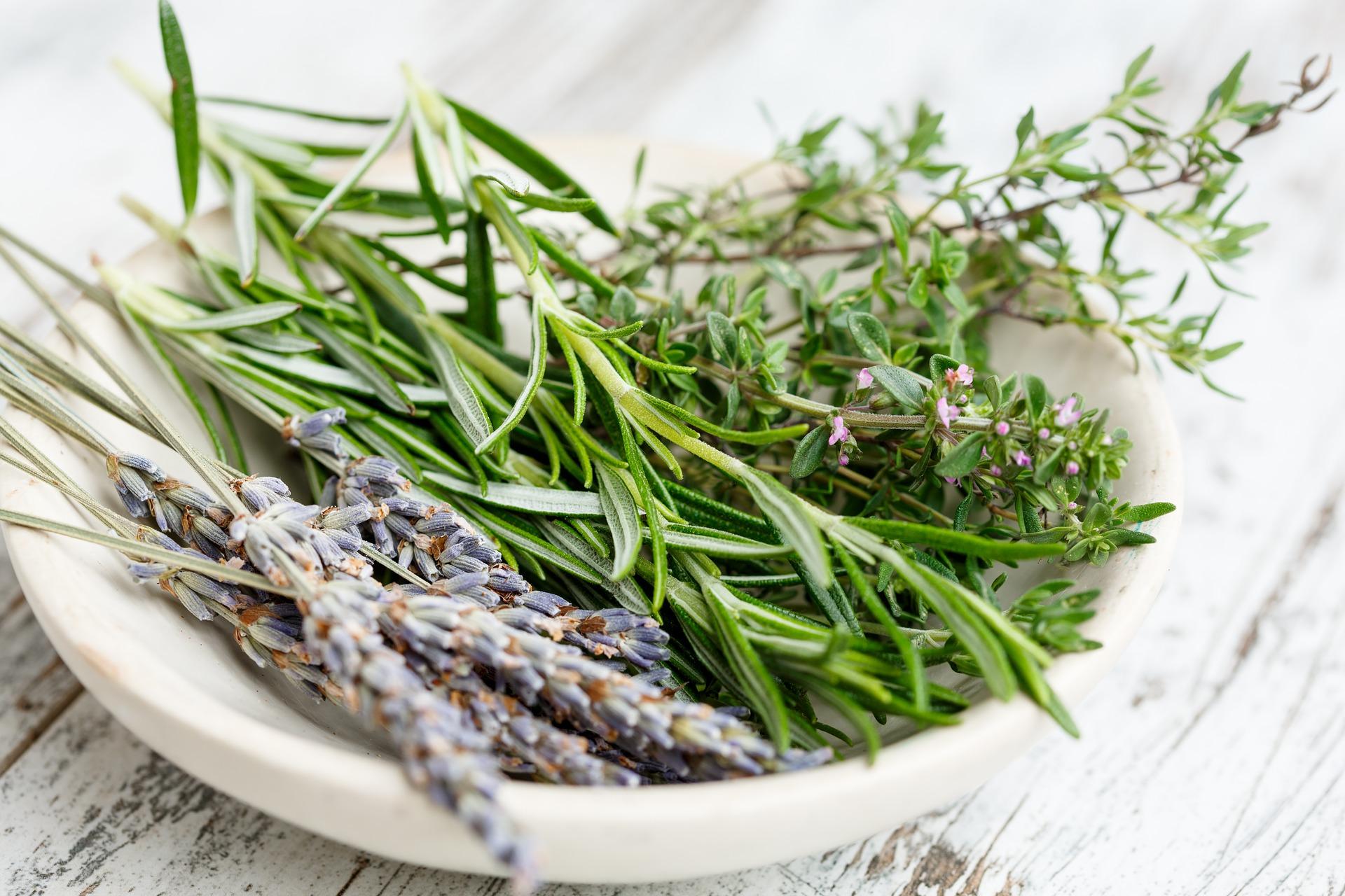 Les herbes de Provence, les vraies - Observatoire des aliments