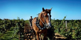 viticulture biodynamie