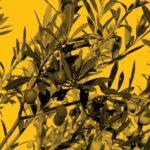 huile d'olive qualité