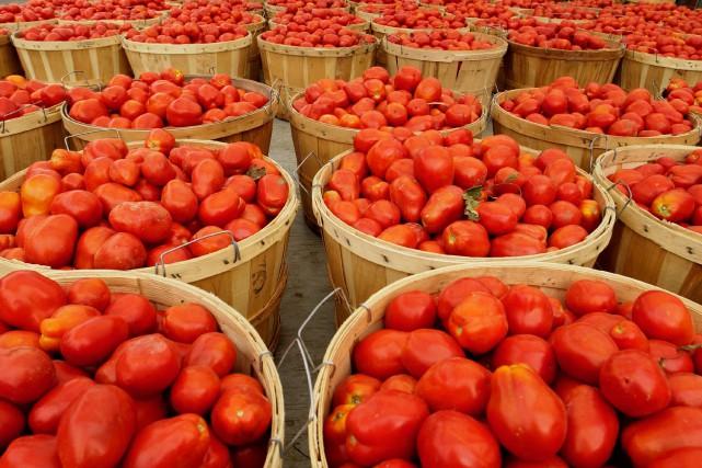 tomates concentré