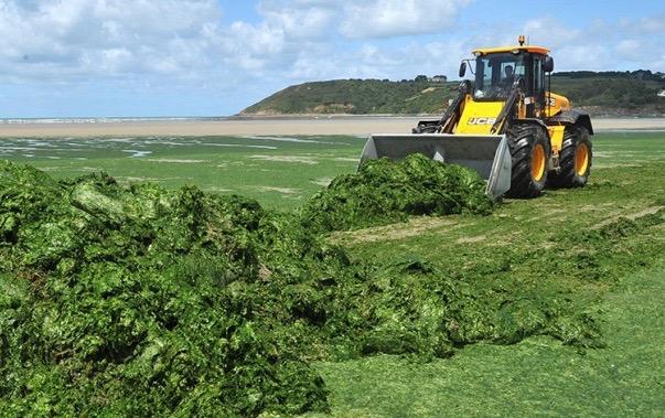 algues vertes Bretagne