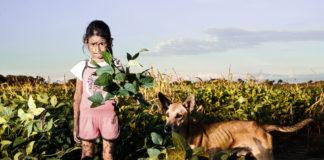 soja OGM et glyphosate
