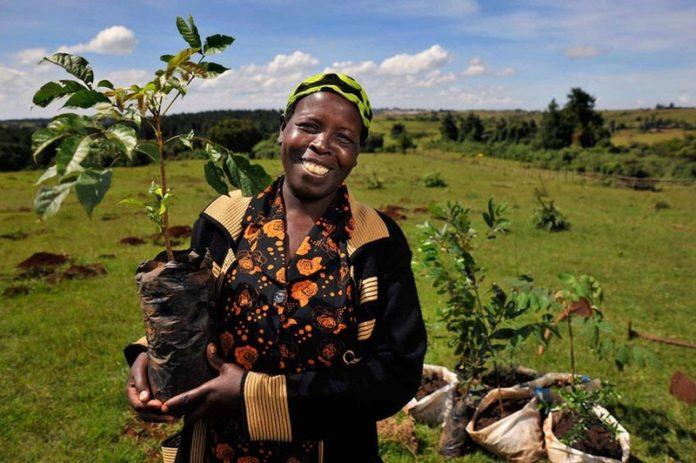 femmes agriculture monde