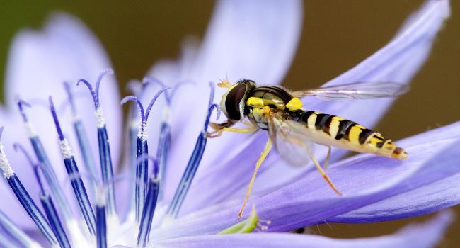 néonicotinoïdes pollinisateurs