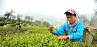 the vert Chine