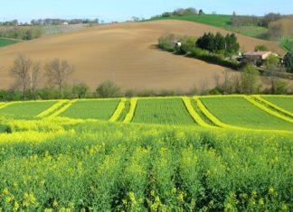 colza pesticides
