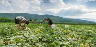 bio sans pesticides