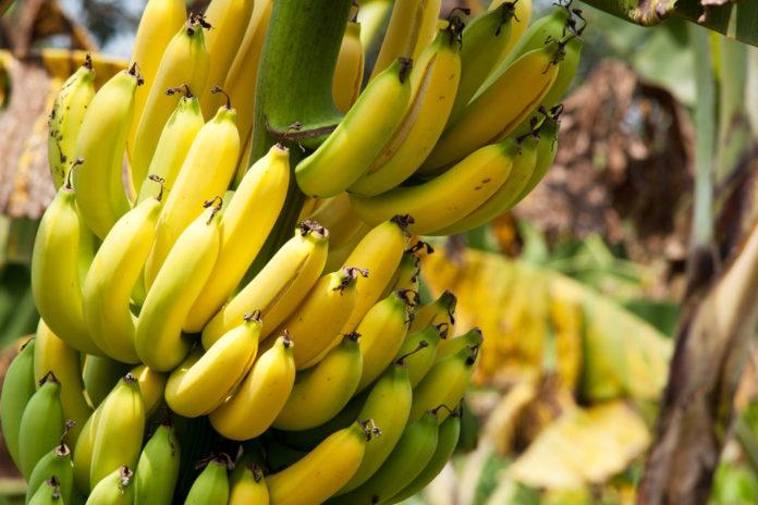 banane et pesticide