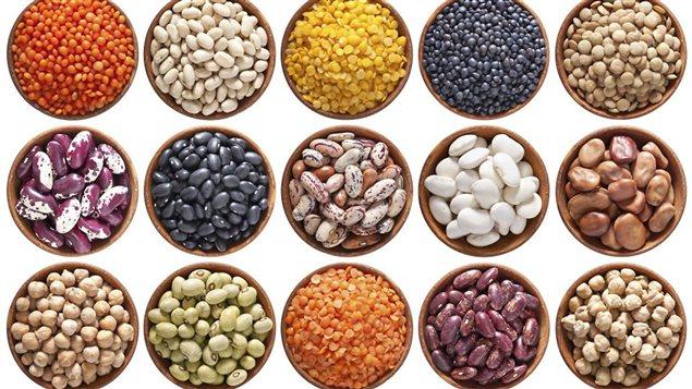 proteines et végétaux