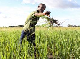 alimentation et agriculture
