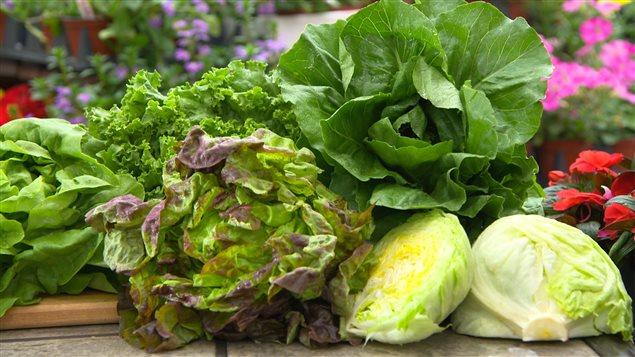 régime Mind légumes