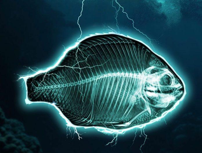 pêche industrielle électrique