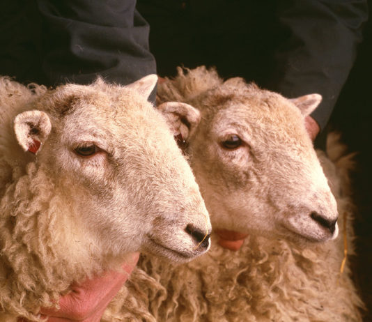 biotechnologies clonage