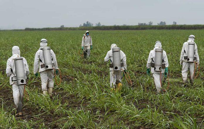 herbicide dicamba