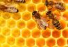 miel et neurotoxiques