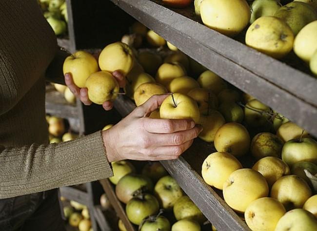 pommes conservation