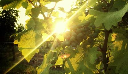 climat vignes