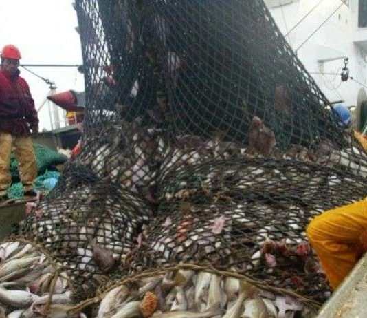 poissons menacés