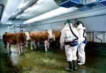 alimentation animale OGM