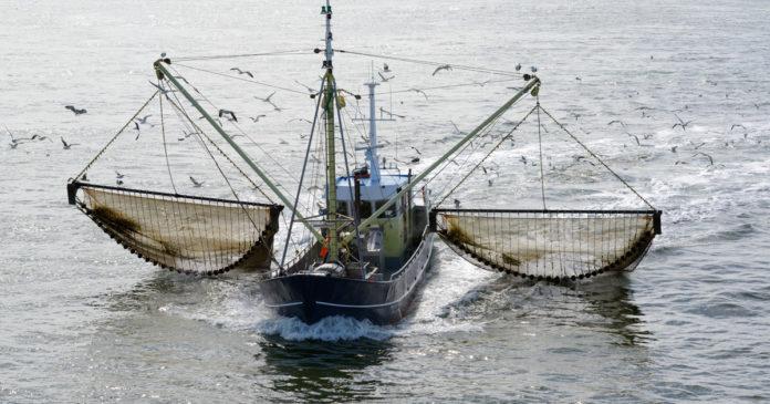pêche électrique chalut