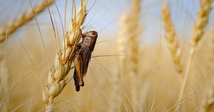 insecticide neurotoxique