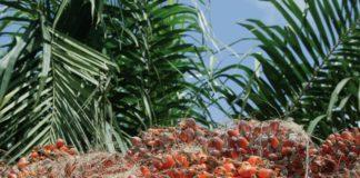 huile de palme biocarburant