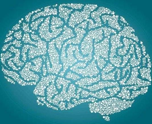 cerveau nutrition