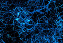 neurotransmetteur neurones