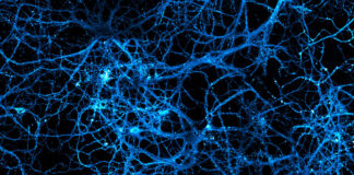 neurotransmetteur neurones
