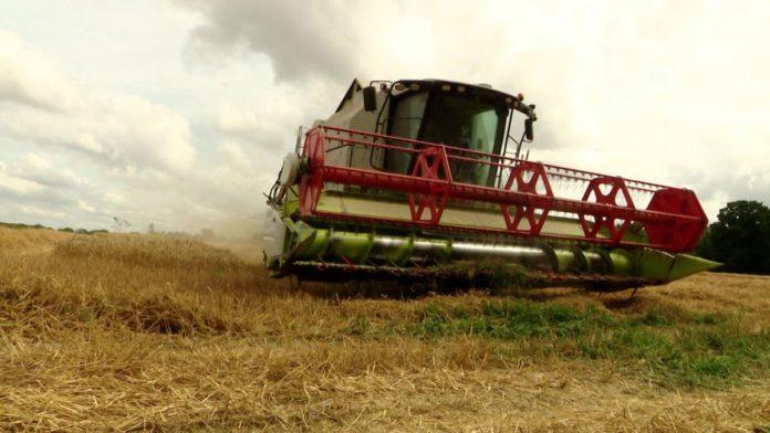 pesticides fongicides blé cultures