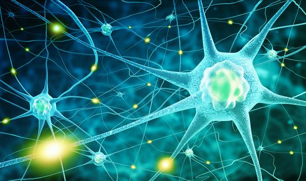 cerveau vieillissement neurones