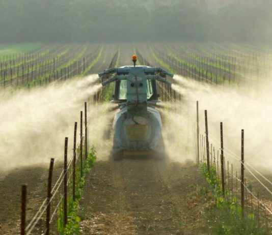 vignes pesticides