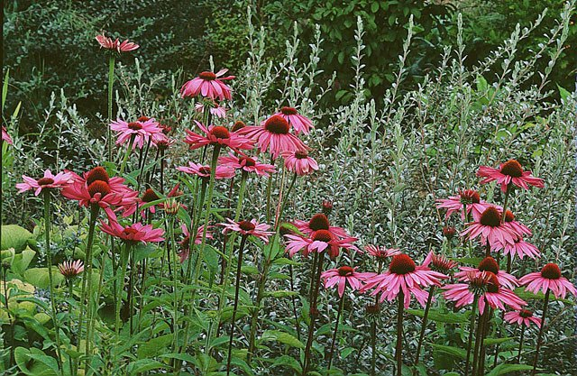 plantes défenses immunitaires