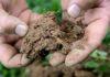 ver terre pesticide
