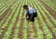 agriculture durable bio